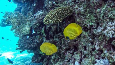 Egypt tourism revival threatens marine ecosystem